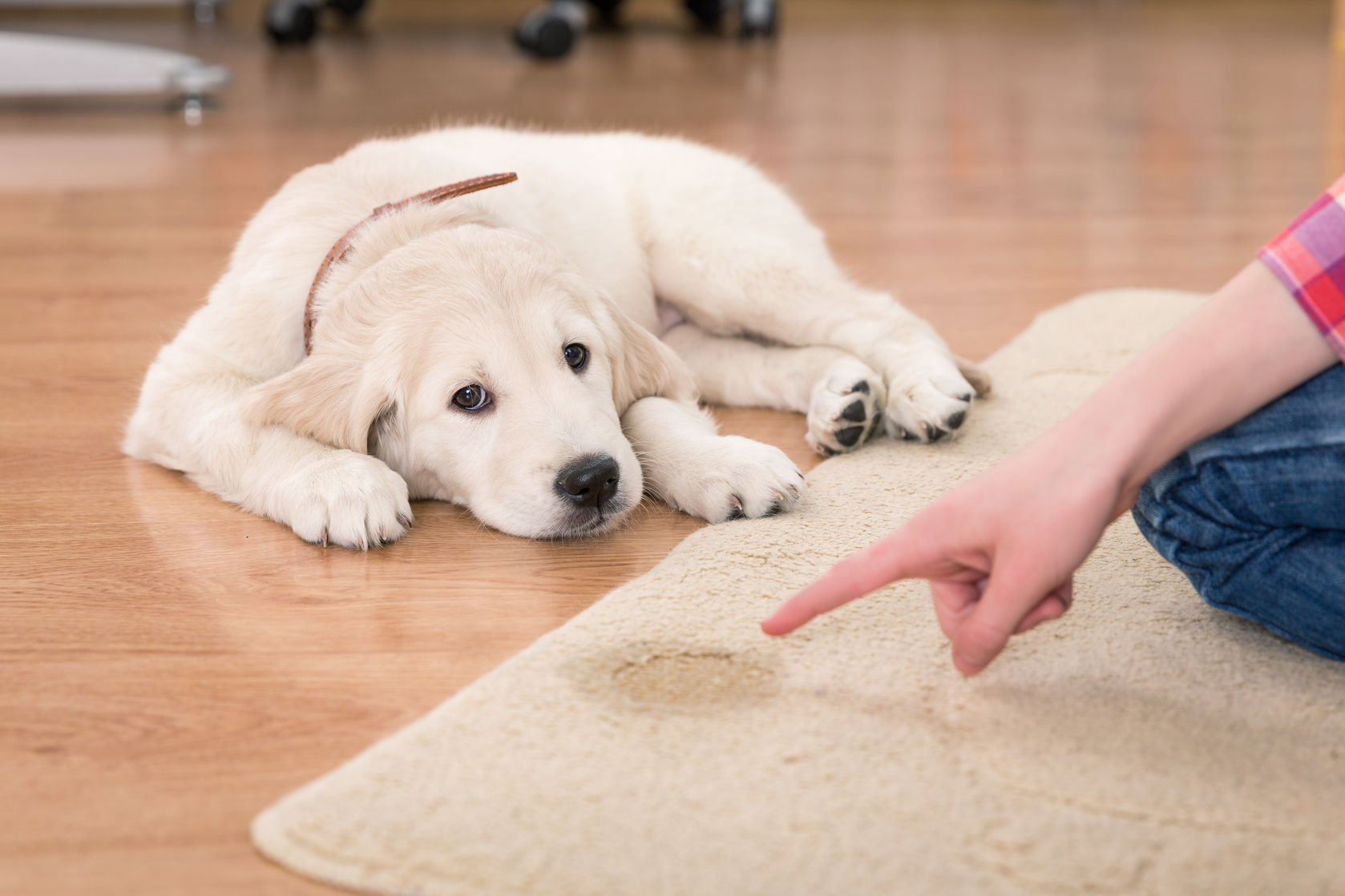 How to Potty Train a Puppy Fast and Forever