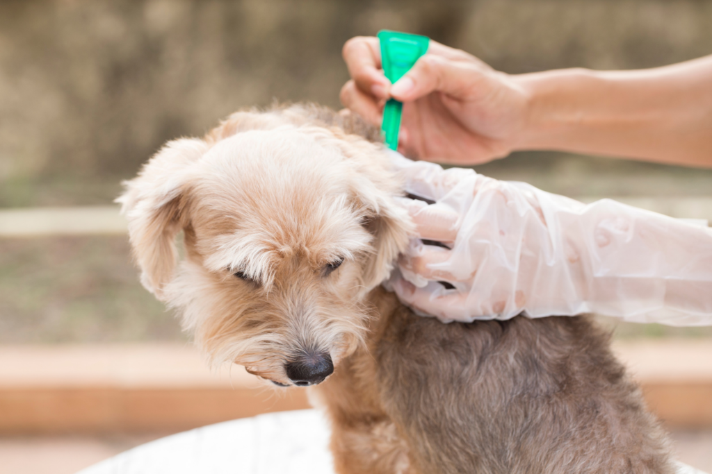 Flea prevention treatment for dogs