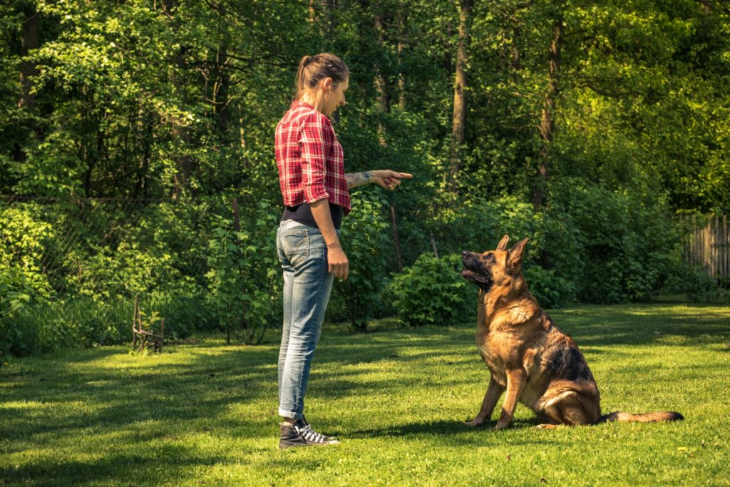 Training a German Shepard to Sit