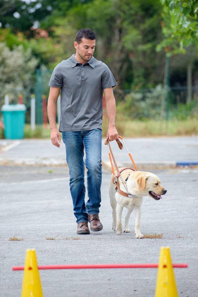 Labrador and trainer at dog training classes for guide dogs