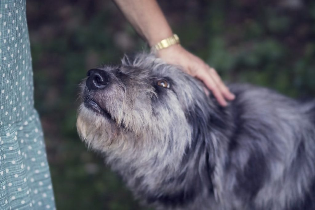 Dog receiving praise for stay