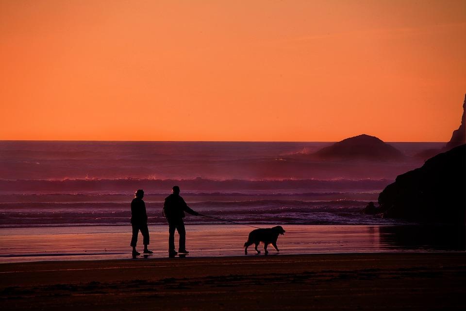 Dog walking along the beach at sunset