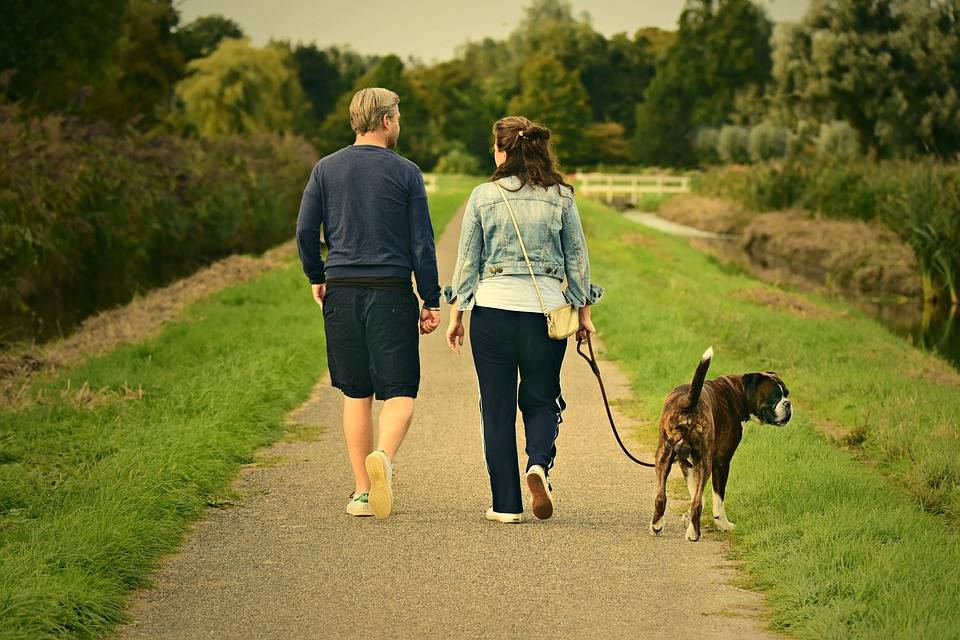 How To Train a Dog To Walk on a Leash Image of Couple Walking Boxer