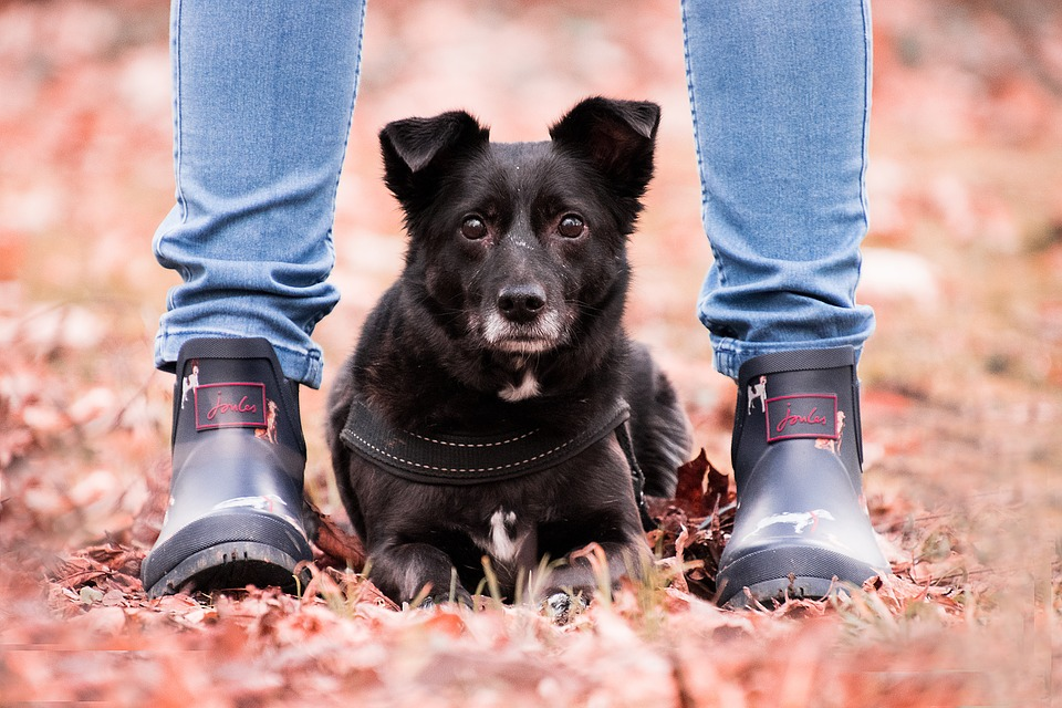 How to Train a Dog to Stay Image of Dog Between Owners Legs