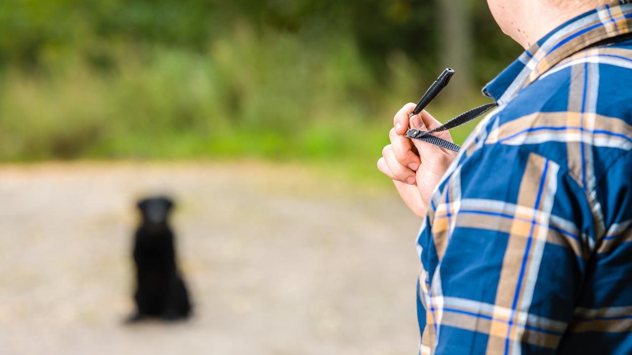 How to Use a Dog Training Whistle