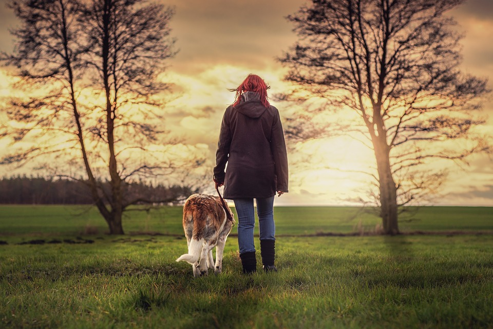 Woman walking a large dog on a loose leash
