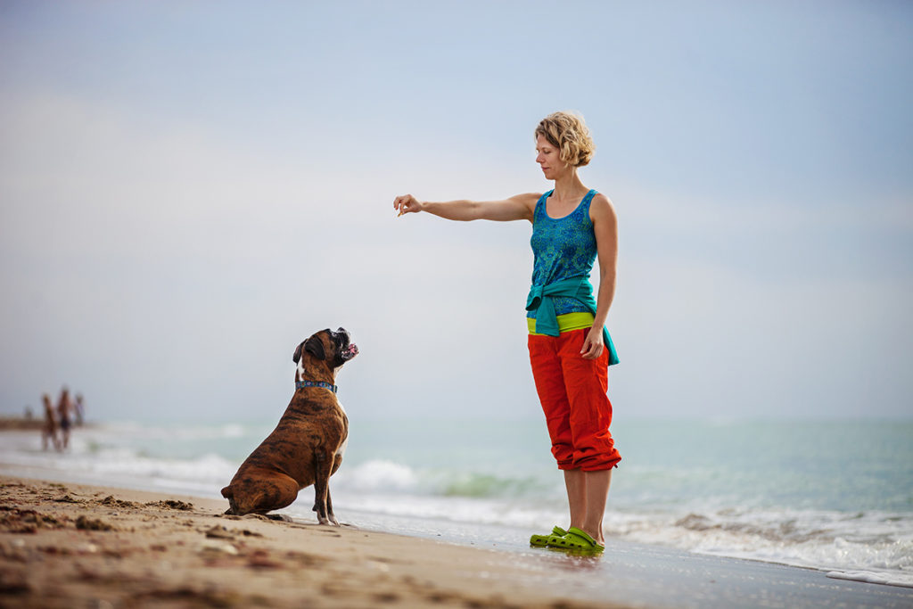 Clicker Training Dogs Example of Boxer on Beach with Owner