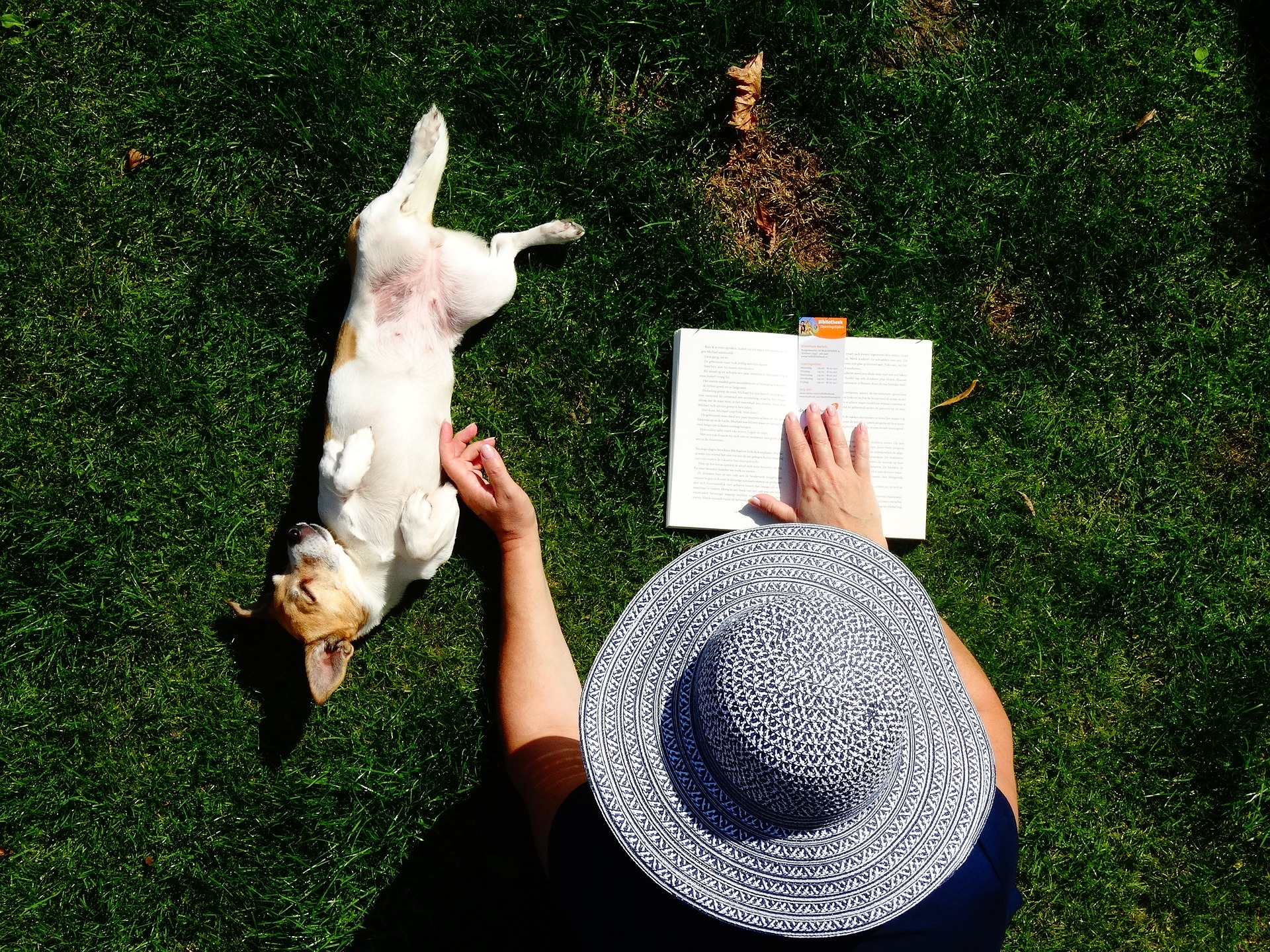 dog and owner reading